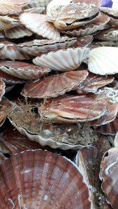 Coquilles Saint-Jacques sur un étal de Dieppe